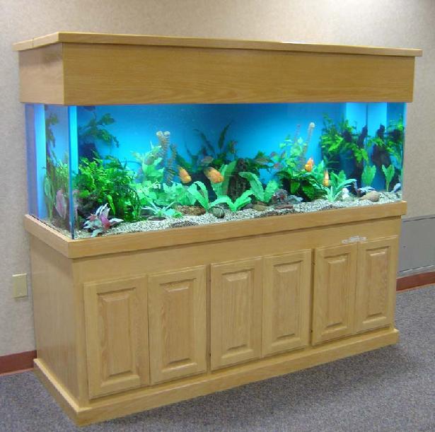 Peralatan Untuk Memelihara Ikan Mas Koki Mas Koki Lovers